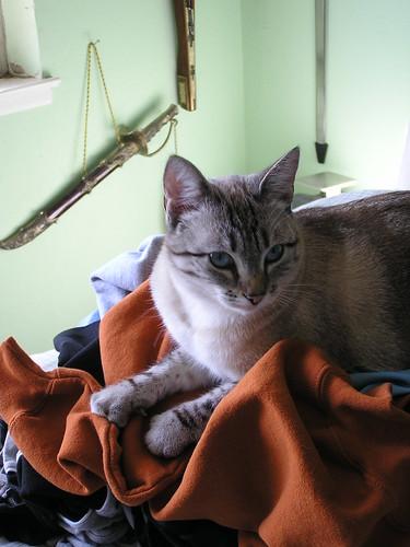 Suz on Laundry 2