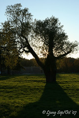 Portrait of a tree (Ljung's street-learning) Tags: europe slovakia scenicsnotjustlandscapes