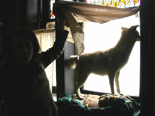 Judith Schaechter and her taxidermy coyote