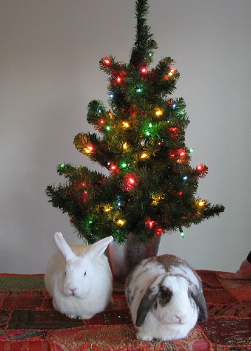 bunnies in front of the tree