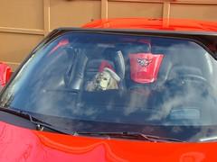 Harleigh in KK's vette (redvette) Tags: christmas corvette redvette tomhiltz