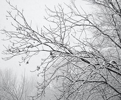 Reach Out (sniderscion) Tags: new winter light sky urban white snow toronto ontario canada storm tree nature up out scott happy branch sony year twist explore growth resolution fv10 reach seek outmywindow snider extend resolve h7 eyewashdesign dsch7 sniderscion