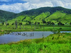 Queensland = green land,  Somerset Dam, Australia (henriette_von_ratzeberg) Tags: green nature rural landscape dam country australia hills queensland somersetdam theperfectphotographer gununeniyrsi