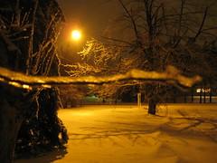 stormy night (Leya :P) Tags: winter snow tree ice sepia night dark evening frozen