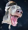 """hiii"" (saikiishiki) Tags: portrait dog chien silly cute love happy grey interestingness backyard funny bokeh ghost gray hound hond trampoline x perro explore hund weimaraner kawaii seen ♥ perra inu omoshiroi weim mukha vorstehhund 20f plor waimarana saikiishiki"