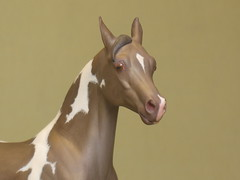 """Rasam in champagne tobiano"" Detail (fluffnstrut) Tags: horse acrylic champagne arabian resin sarahrose tobiano rasam modelhorse jenkroll"