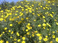 printemps en tunisie (elmina) Tags: spring tunisia printemps tunisie 봄 튀니지