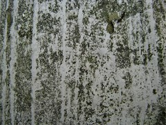 Mildew Porch