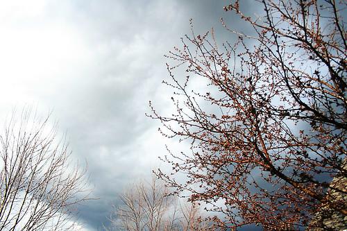 clouds through my cherry tree