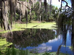 The Prairie Primeval (gatorgalpics) Tags: history naturalhistory explore lachuatrail waterlevel paynesprairie steamboats blueribbonwinner alachuasink amazingamateur onehugelake 1873to1891 floridanaquifer alachualake carriedpeopleandcitrus micanopytogainesville