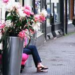 235DH-'De Haagse lente' thumbnail