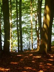 Am schmalen Luzin (BarbaraR2008) Tags: feldberg amschmalenluzin