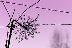 (Cameron Richardson) Tags: gjøvik norway purple minimal
