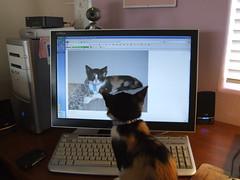 Kittens18May09 001 (DenLefebvre) Tags: cat kitty kittens