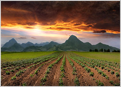 Potatoes (Jean-Michel Priaux) Tags: sunset mountain france nature field photoshop montagne painting spectacular landscape potatoes champs surreal alsace plantation paysage hdr vosges anotherworld patates alignement mattepainting pommesdeterre valff unautremonde priaux mygearandme ringexcellence flickrstruereflectionlevel1