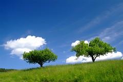 (emikalia) Tags: nationalpark flora ast sommer jahreszeit natur pflanze wiese himmel wolke grn blau holz ste landschaft bume schatten baum frhling mrchen einsam hoffnung entspannen idyllisch relaxen erholung spazieren solidaritt lichtspiel ruhig alleine natrlich naturschutz gegend unberhrt schutzgebiet wachsen gemeinschaft umweltschutz landschaftsschutz naherholung ursprung gehlz lichtstimmung standfest verwurzelt meschenleer