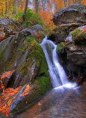 """Fall"" Water - Shenandoah National Park (Dwood Photography) Tags: park autumn fall water leaves dark waterfall october falls national shield shenandoah soe hollow 2007 excellence shenandoahnationalpark supershot appalachianblueridgeforests dwoodphotography dwoodphotographycom"