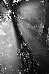 The Eloquent Light