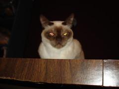 My snoopervisor