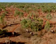 Diptotodon jungles