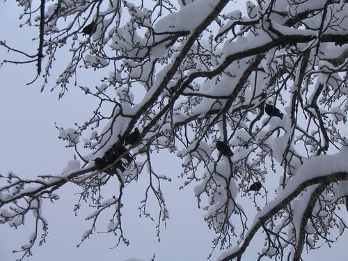 снег-014