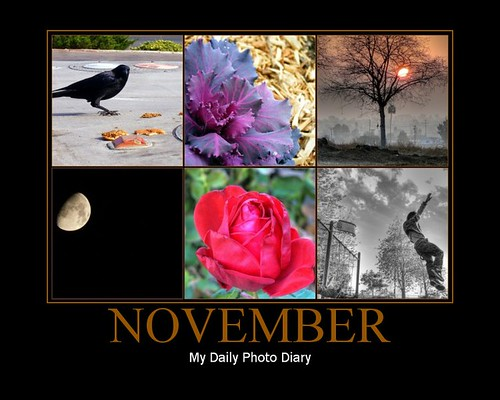 My Daily Photo Diary, November