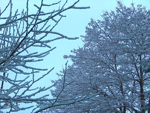F-Snow Trees