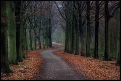 path (Niquitin) Tags: netherlands nikon herfst pad nederland niquitin dehorsten d80 beukenlaan dickbruinsma