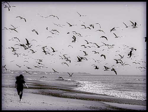 Running with the Seagulls by * Toshio *.