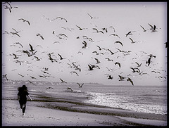 Running with the Seagulls (` Toshio ') Tags: california blackandwhite woman seagulls white black beach colors girl birds hair fun fly flying jump wings sand play running run duotone capistrano westcoast soe toshio capistranobeach superbmasterpiece diamondclassphotographer