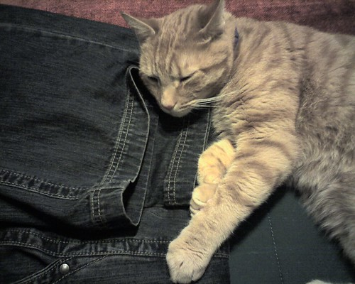 Cats Love Denim