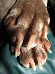 Dog Paws (Katz Eye) Tags: dog feet dogpaws caninenails opiewanknopie katzeyephotography