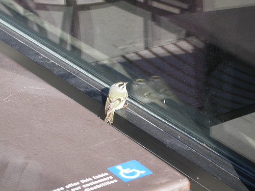 Stunned Bird, Milwaukee