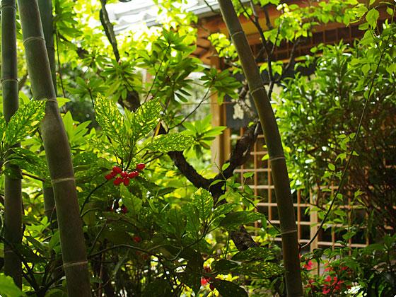 蕎麦屋さんの庭