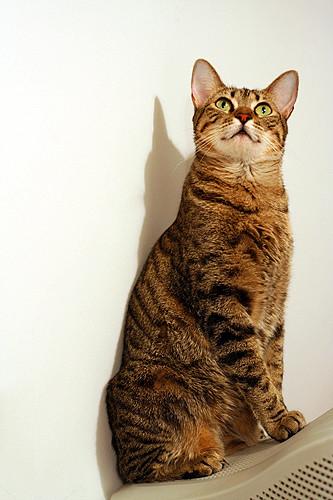 Chihiro the poser kitty!