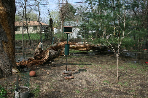 What's Left of the Willow Tree