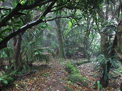 Climbing Mt Gower (sbittinger) Tags: lordhoweisland