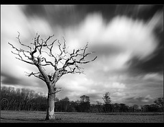 ..... (Chrisconphoto) Tags: longexposure blackandwhite bw tree clouds movement deadtree sthelens weldingglass billinge