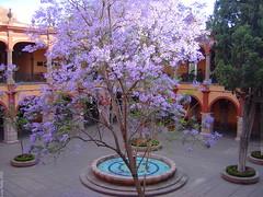 UASLP Patio Edificio Central con Jacarandas en flor - SLP México 2005