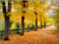 Parque en amarillo.
