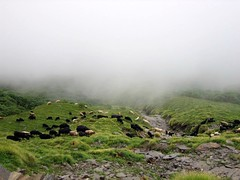 Lost in mist (Simply trying) Tags: travel mist mountain misty trek sheep flock herd tungnath agastyamuni
