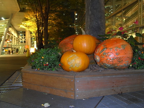 Pumpkins in Yurakucho!