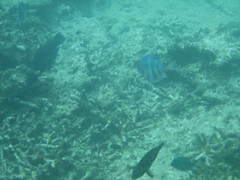 IMG_2420 (dcgreer) Tags: malaysia pulau redang pulauredang