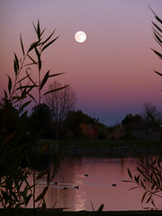 harvest moon ducks (joiseyshowaa) Tags: park sky moon tree westminster night dark stars landscape colorado colorful glenn north denver creativecommons land scape harvestmoon broomfield bigmomma northglenn colorfulsky abigfave aplusphoto top20pink20 ebrains thechallengefactory joiseyshowaa joiseyshowa