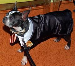 Oreo as Harry Potter at Attention at Eleven80