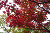 Kyoto Nov 2007 (meguropolitan) Tags: japan kyoto 京都 kitaku daitokuji 大徳寺 北区 murasakino 紫野 黄梅院 obaiin