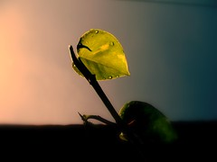 Dawn & Dusk (The Lensman, Bala) Tags: light dawn leaf drops dusk wait mywinners abigfave diamondclassphotographer flickrdiamond nouvellephotography