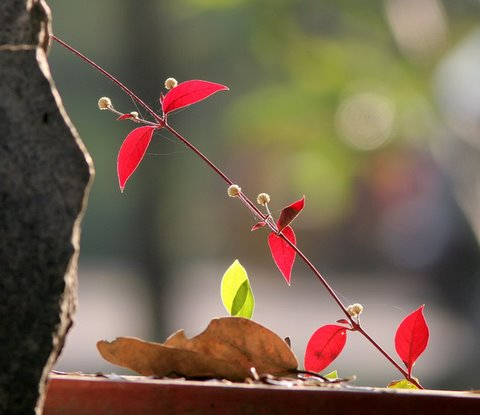 leaves, buds and rocks....Ranganathittu 040108
