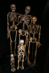 skeleton family 592