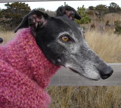 Ravelry Greyhound Snood Pattern By Lenora Conlon